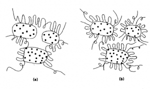 Schematic illustration of (a) bridging flocculation and (b) steric stabilization (restablllzation by adsorbed polymer).
